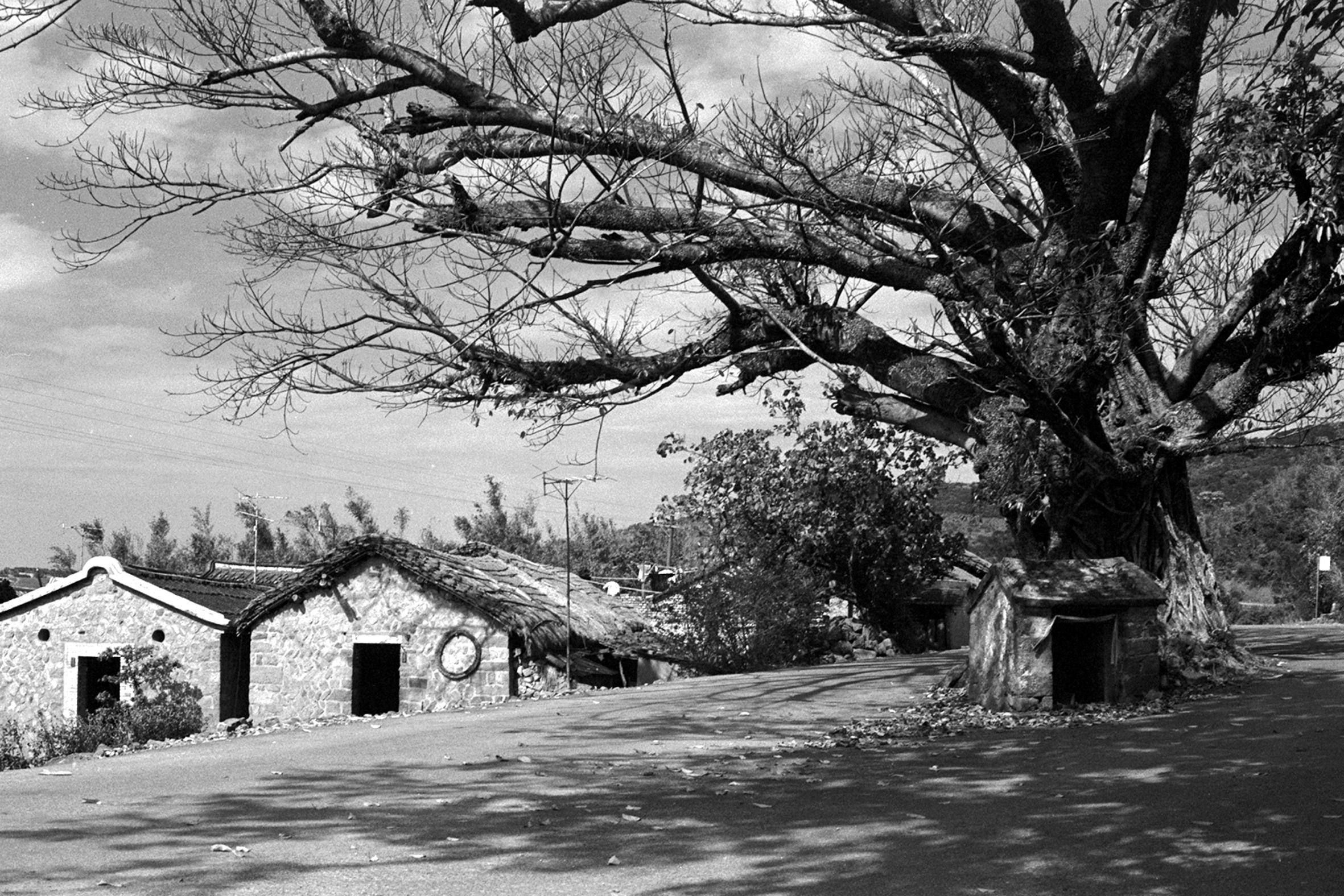 樹公庇蔭土地公 1970