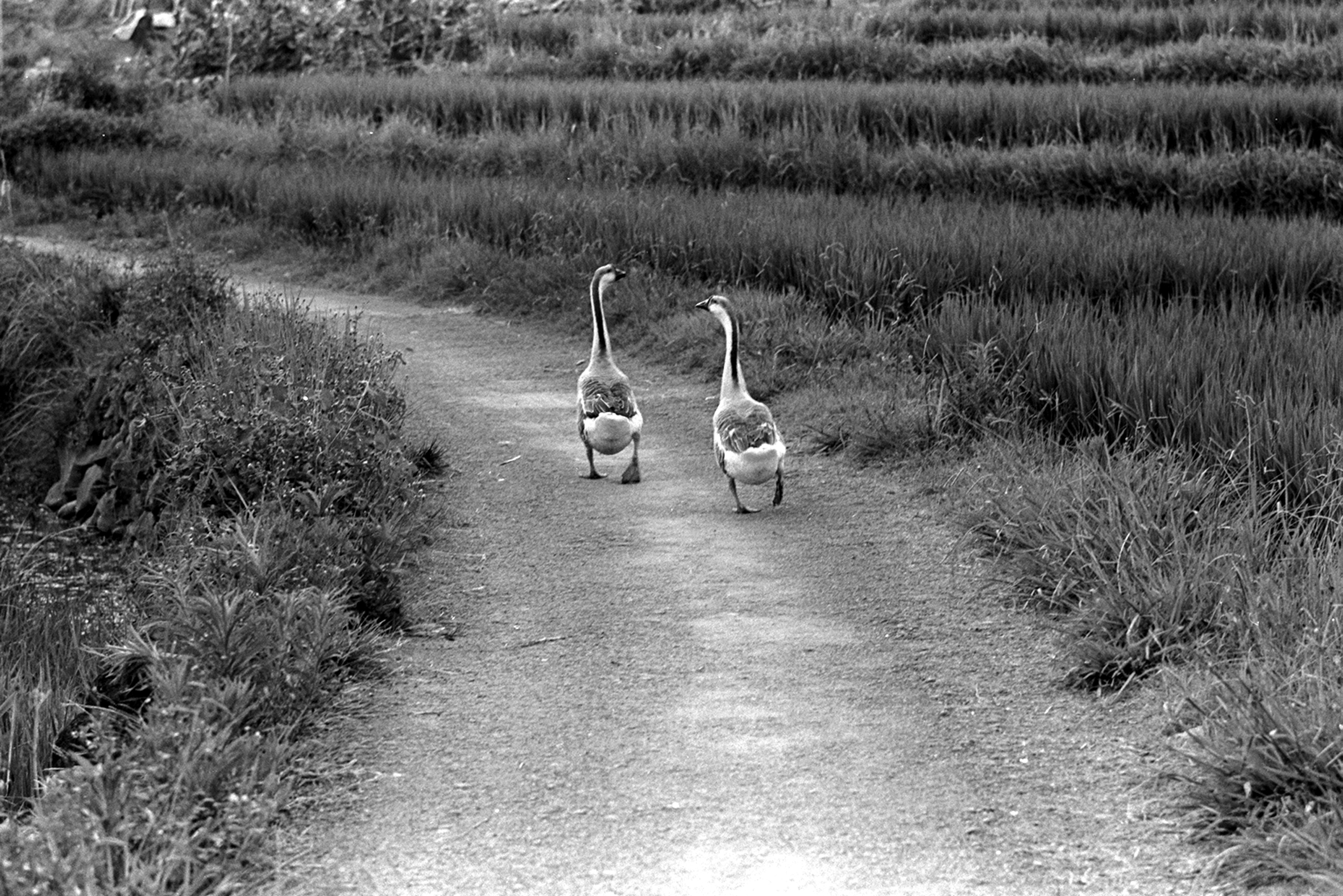 夫唱婦隨路不遠(竿蓁林) 1970.5.31